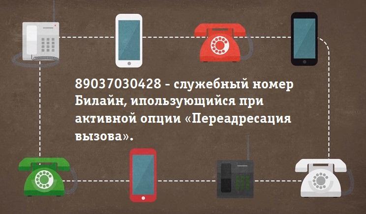 89037030428-это-сервисный-номер-от-Билайн
